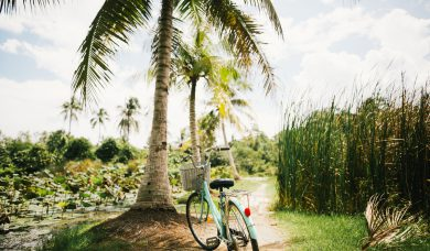 bicycling on the beach under a palm tree
